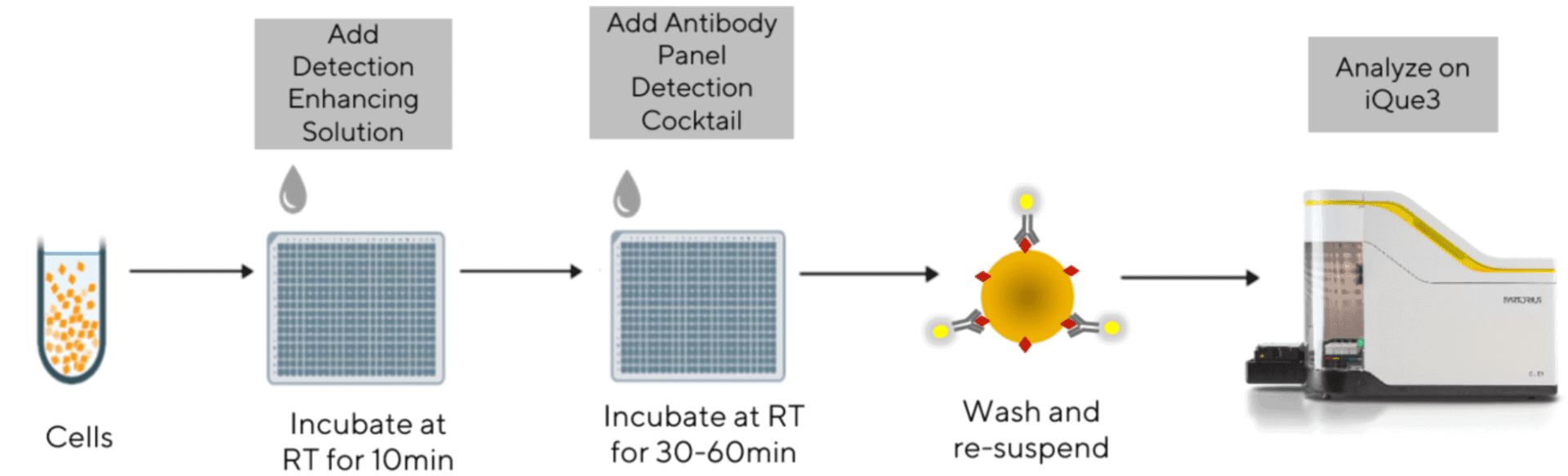 iQue® T Cell Phenotyping Kit (CD3, CD4 and CD8) workflow