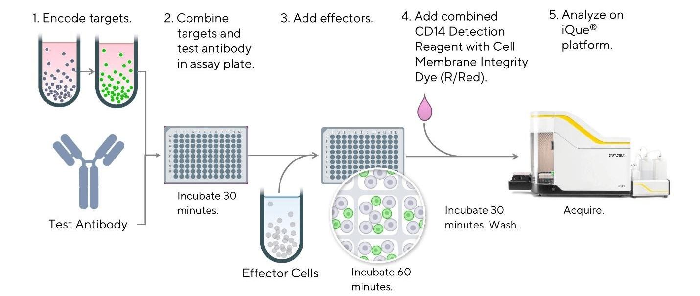 iQue® Human Antibody Dependent Cellular Phagocytosis (ADCP) Kit Workflow